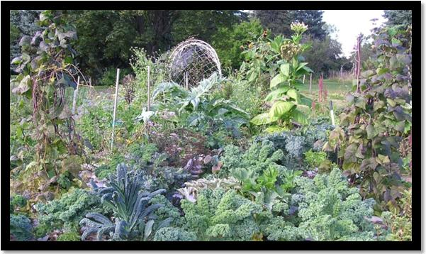 Blog Picture - Permaculture Trials at MCG 2013